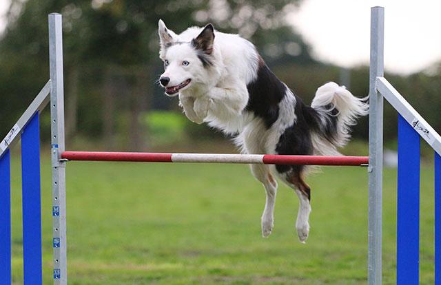 Unsere Hunde beim Agility Training