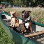 Paddeltour mit Hunde 2019